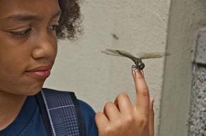 Devon & Dragonfly
